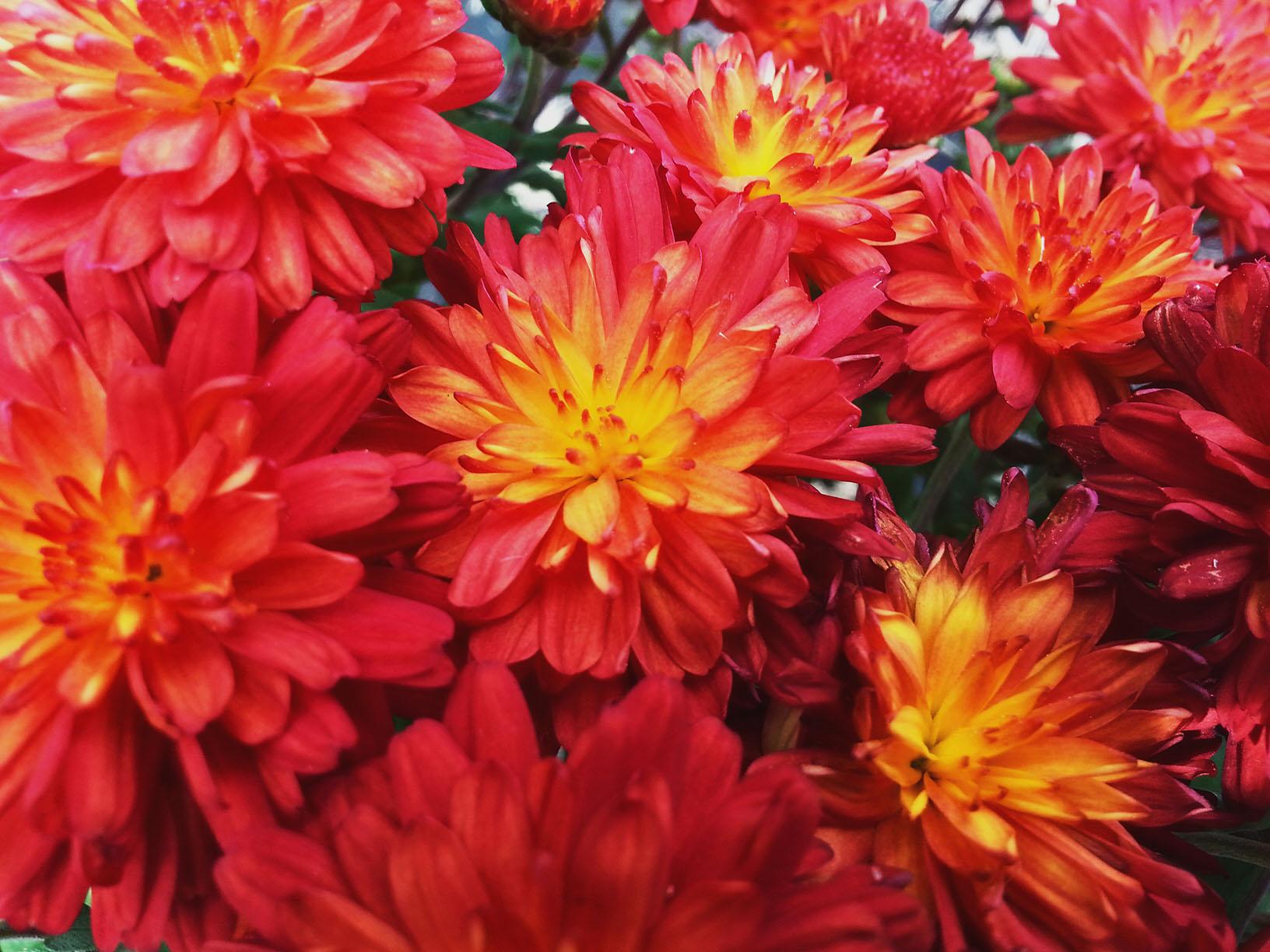 Flowers – FOCA