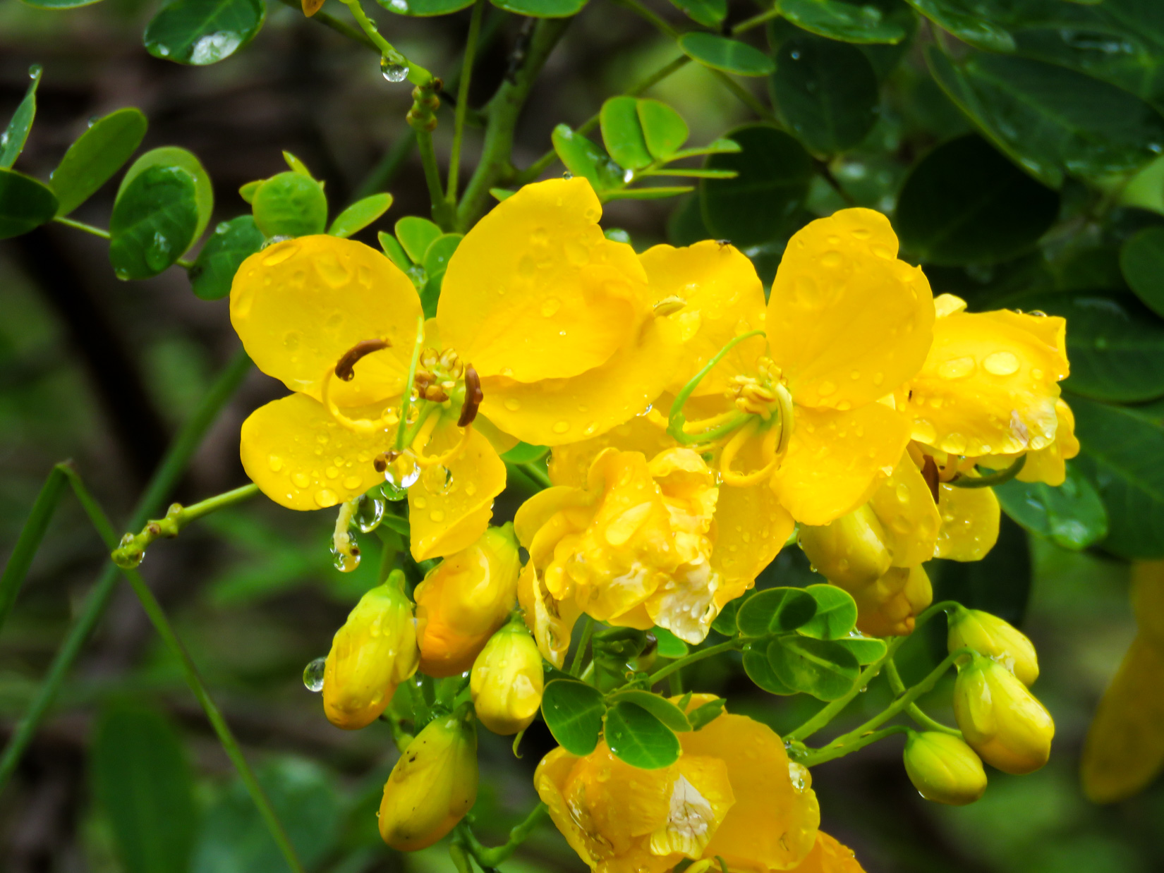 Wet Yellow Flowers