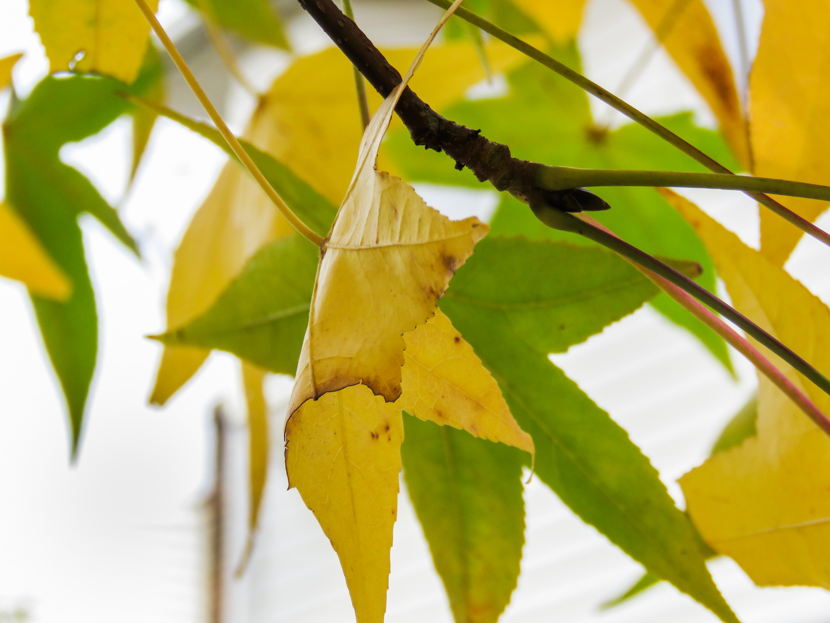 Leaves on Tree Branch