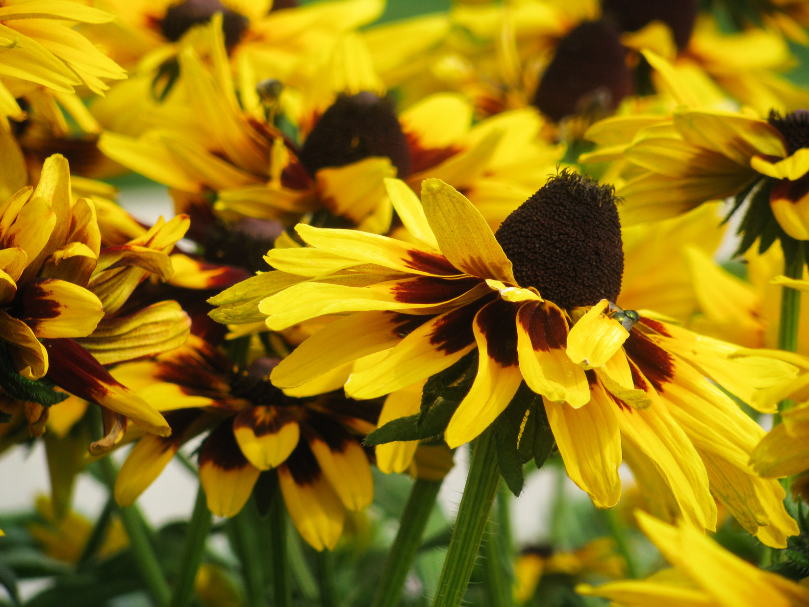 Yellow and Black Flower Petals