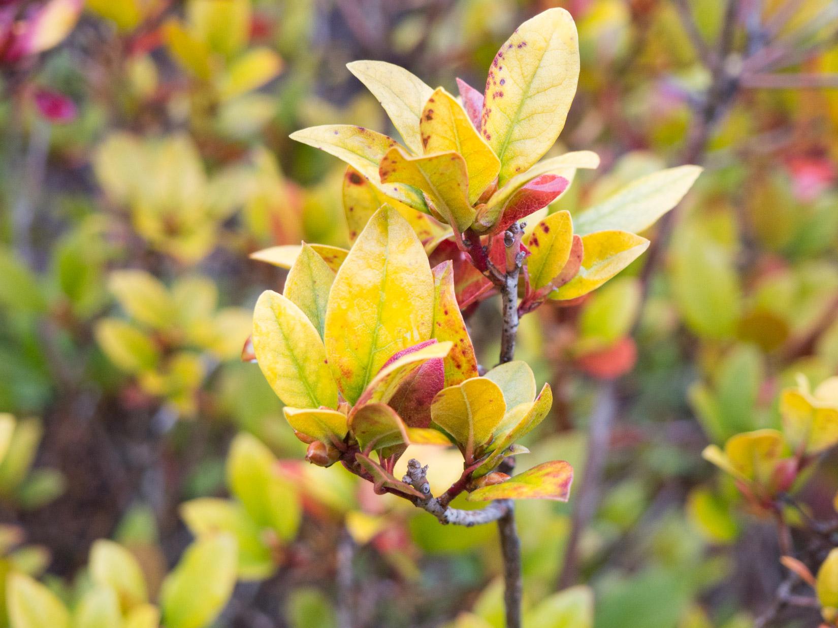 Leaves Macro