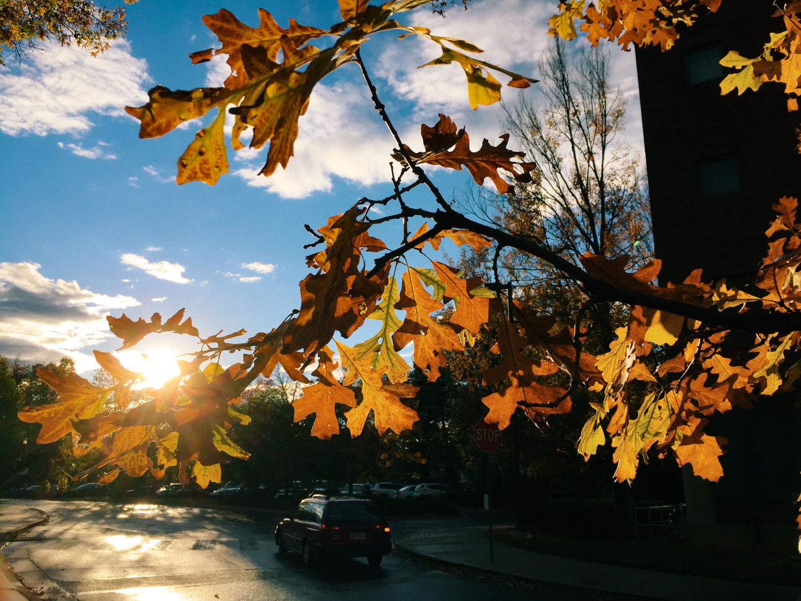Fall Tree Leaves – FOCA