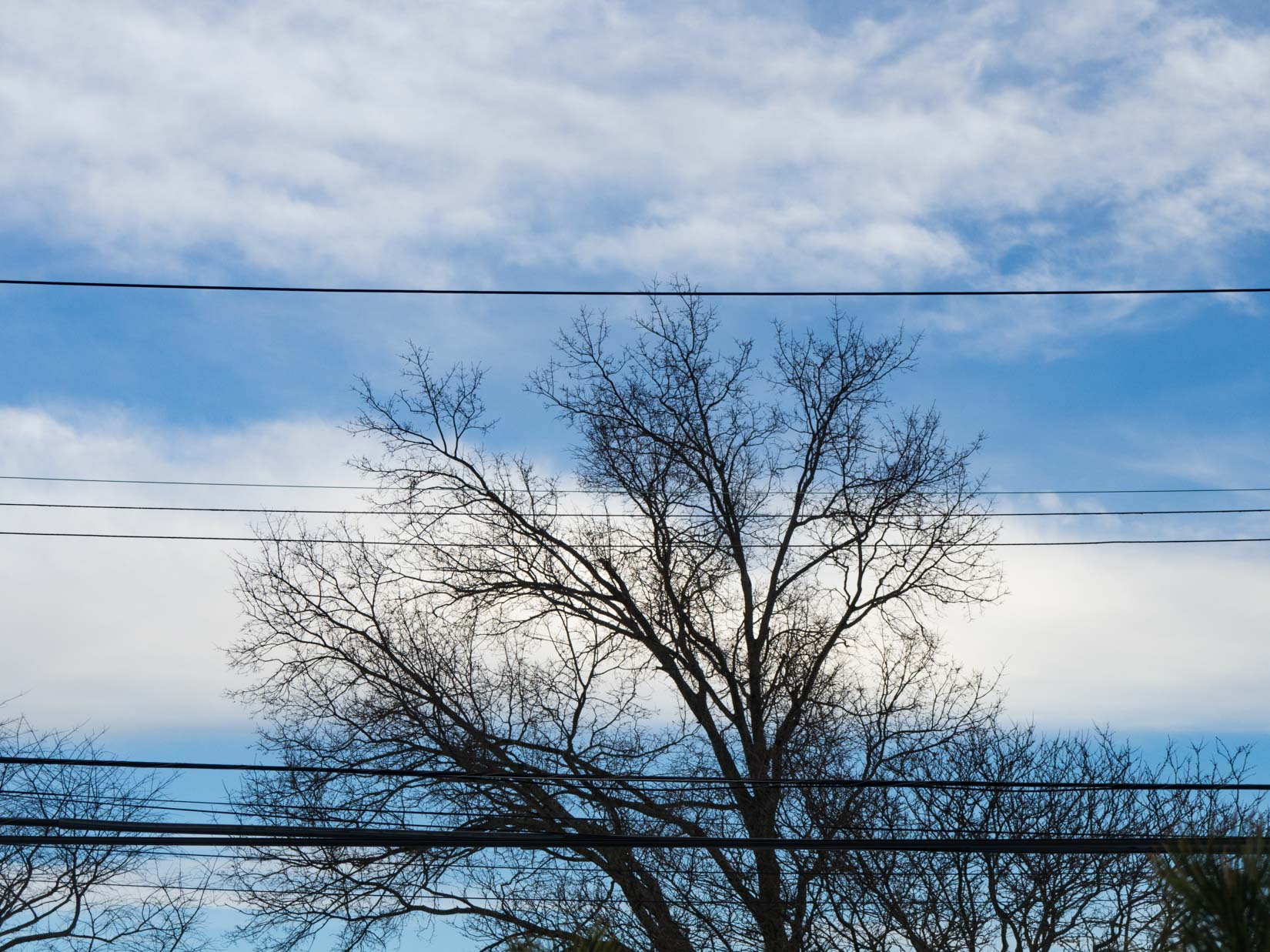 Tree Branches Over Blue Sky and Clouds