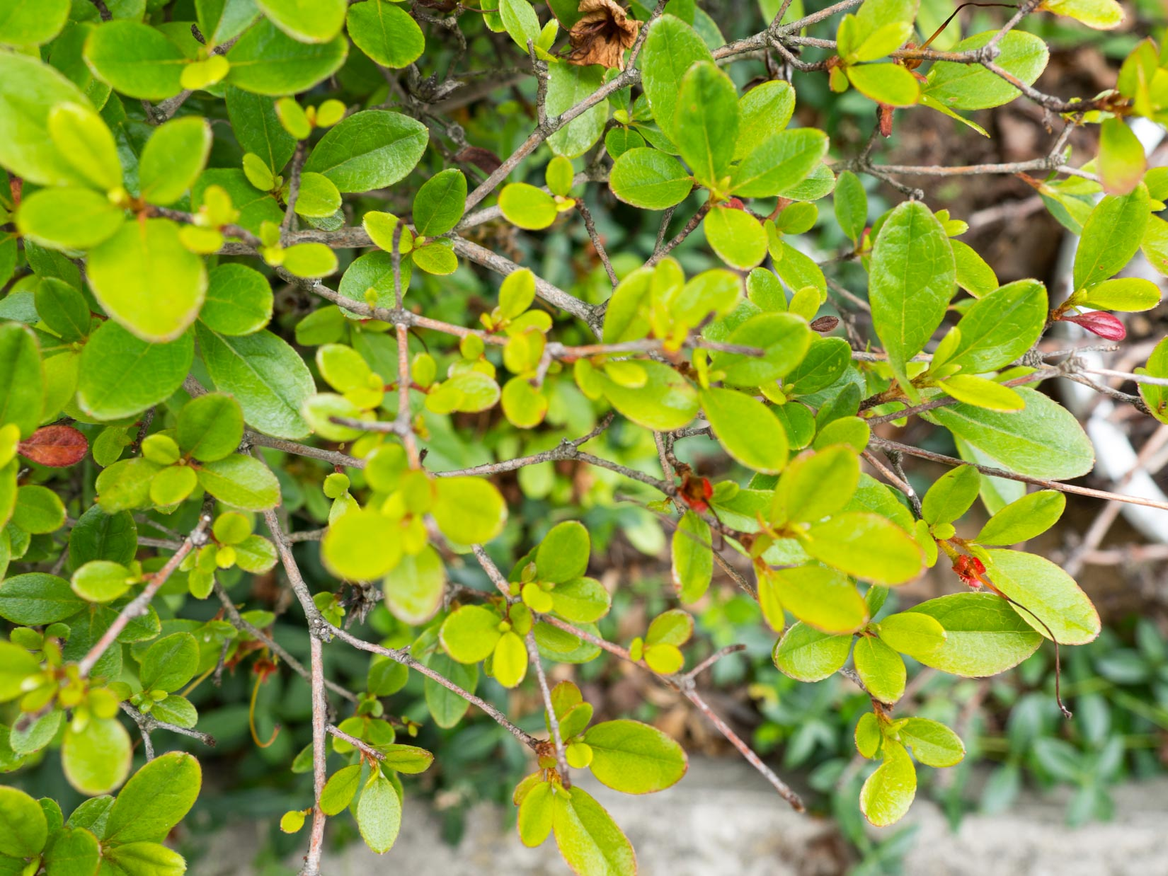 Leaves on Bush with Branches