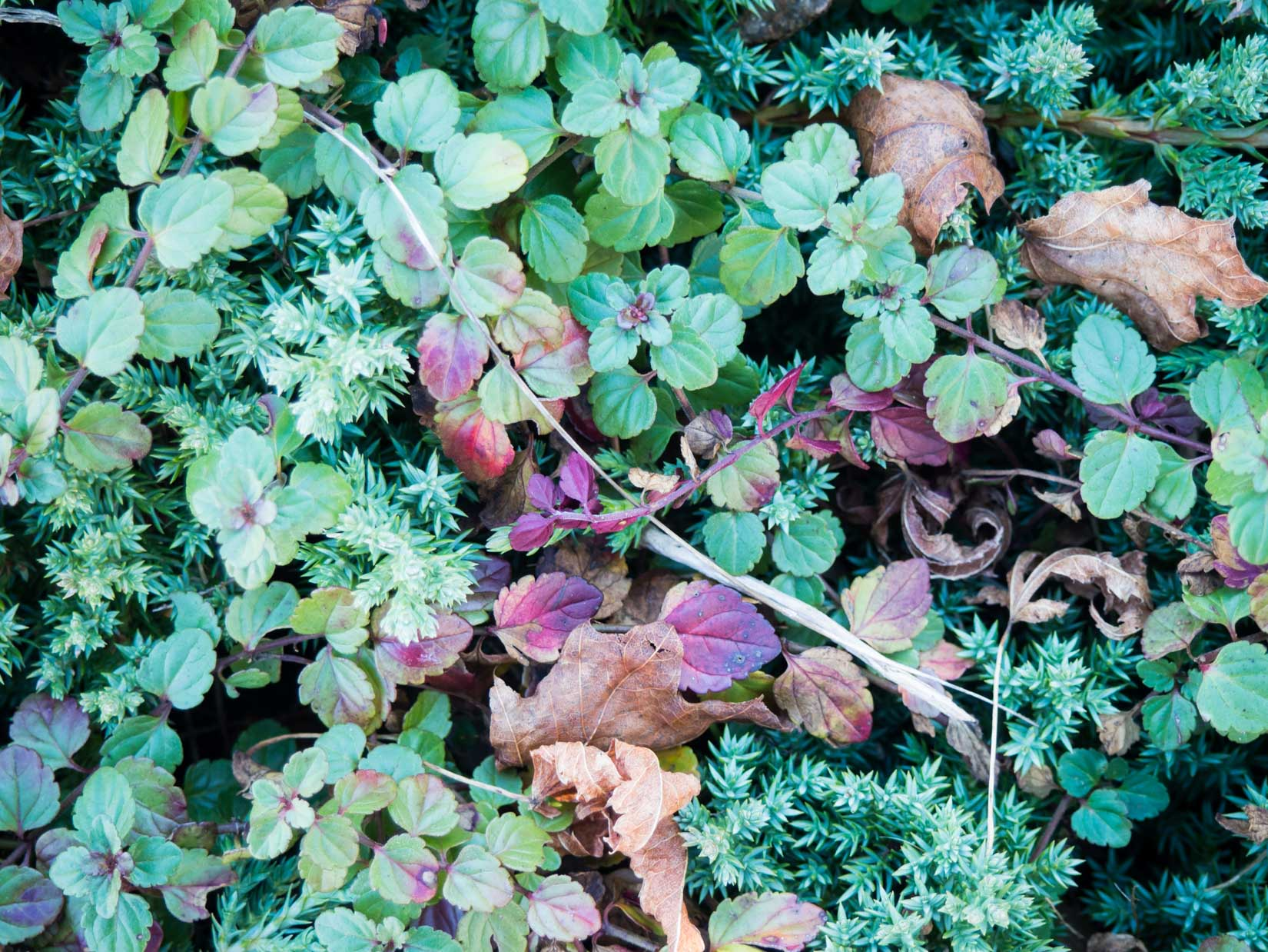 Leaves and Clovers