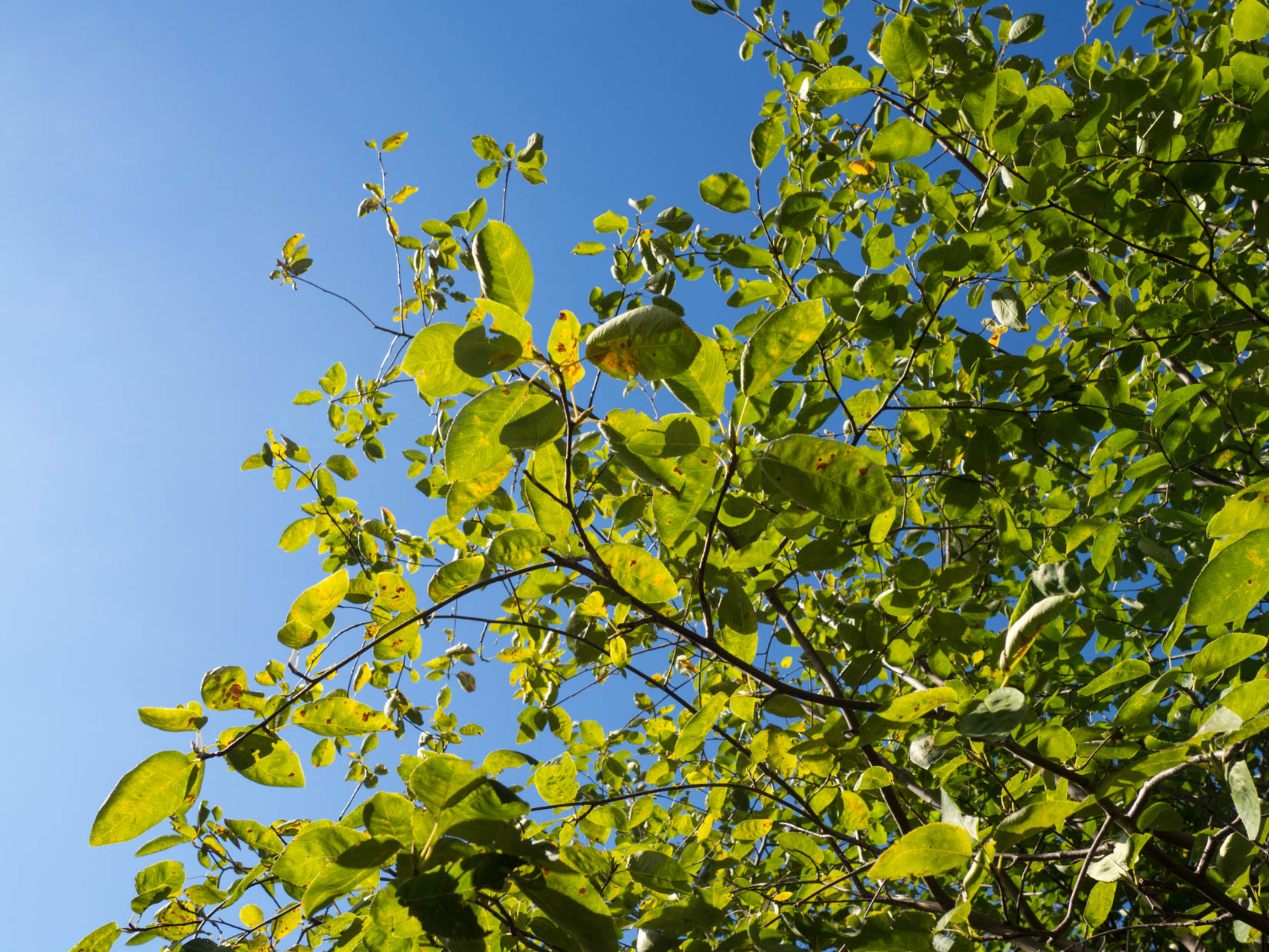 Leaves on Tree Over Blue Sky