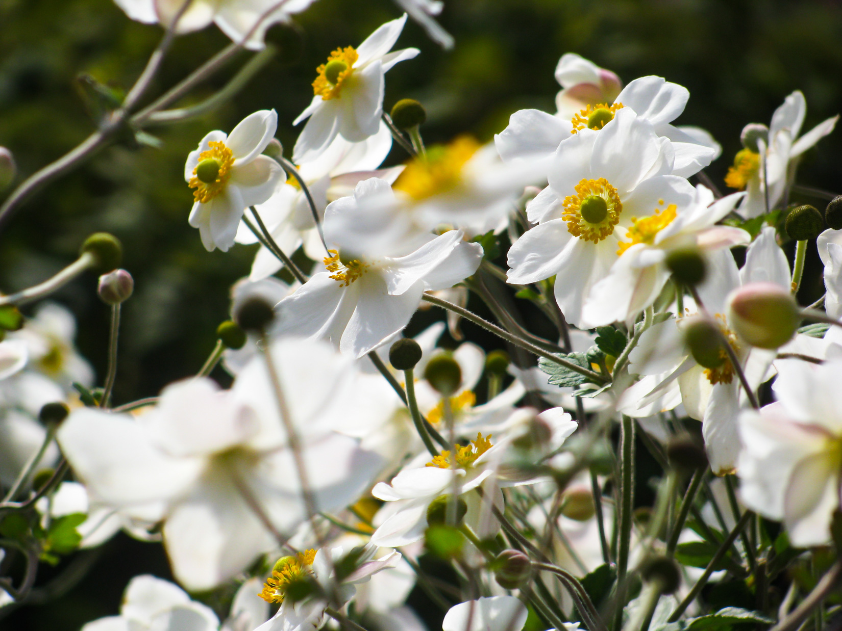 White and Yellow Flowers in Garden