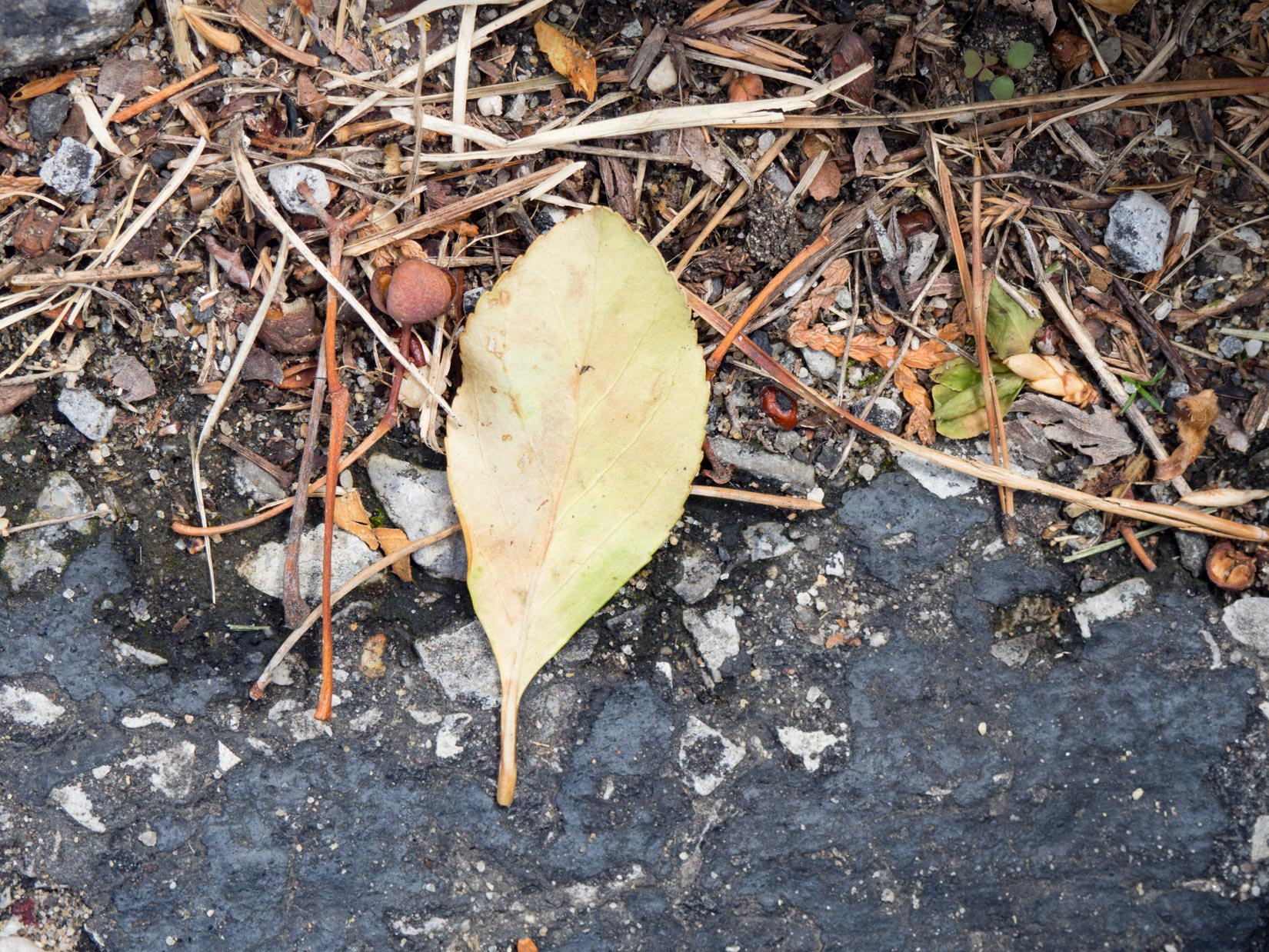 Leaf on Stone Concrete and Sticks