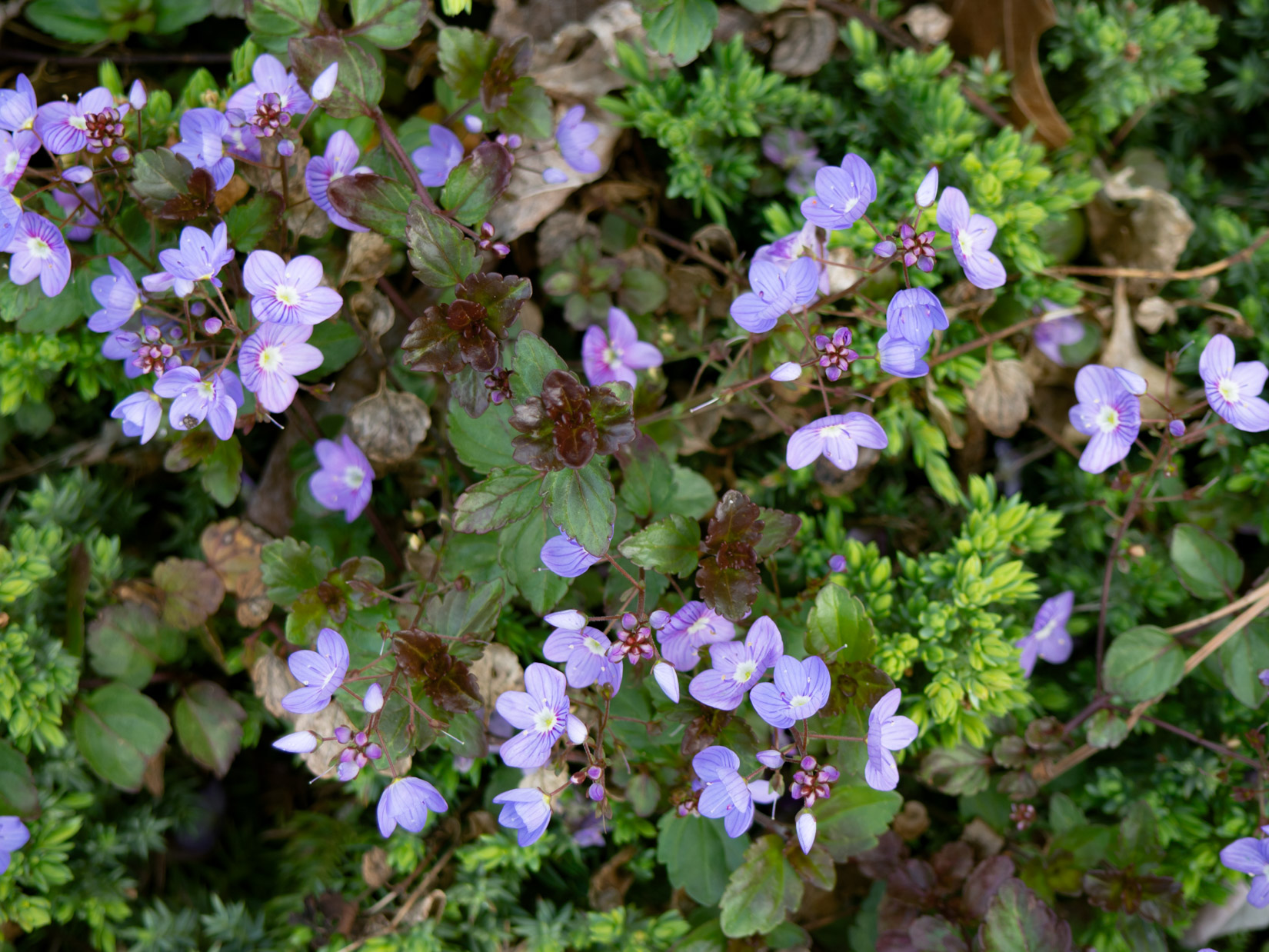 Purple Flowers and Leaves in Garden