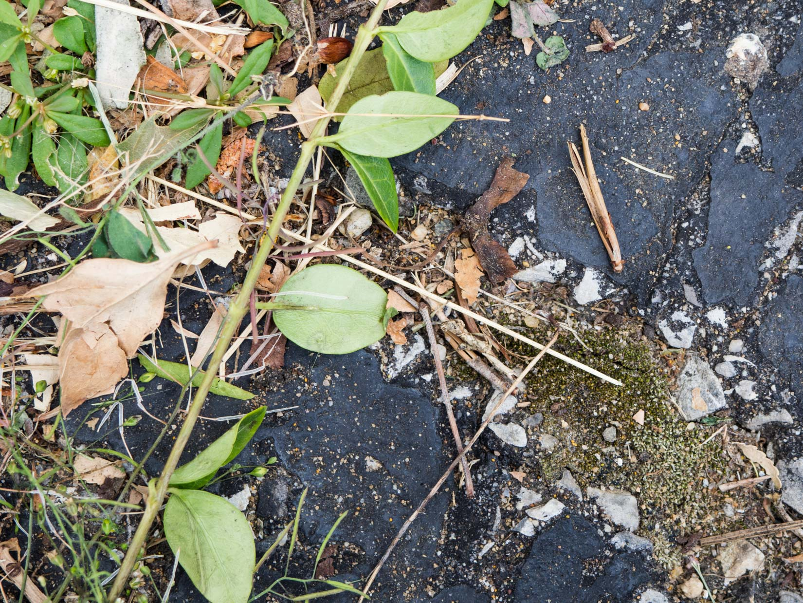 Leaves and Twigs on Concrete