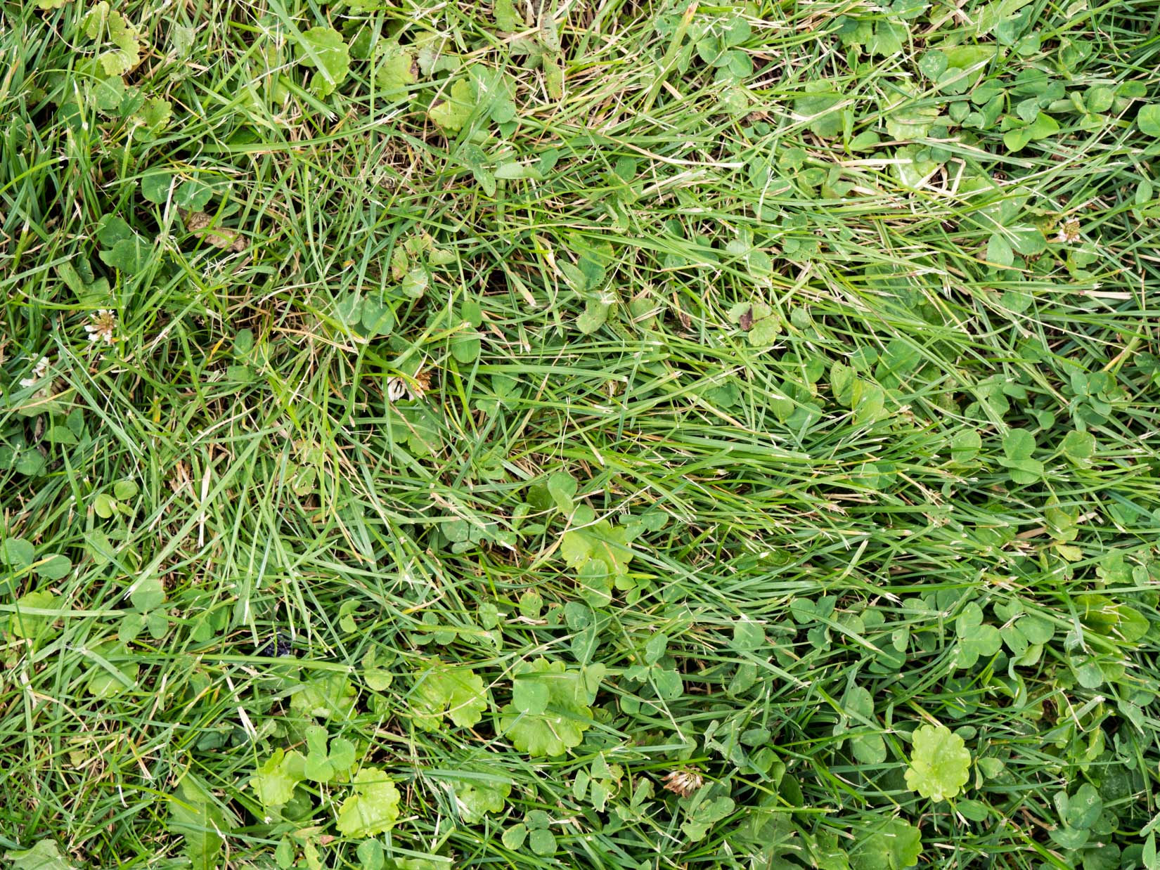 Grass and Leaves Texture