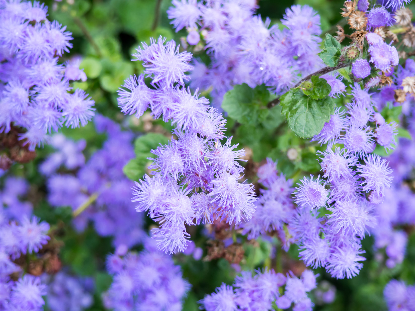 Purple Flowers in Garden