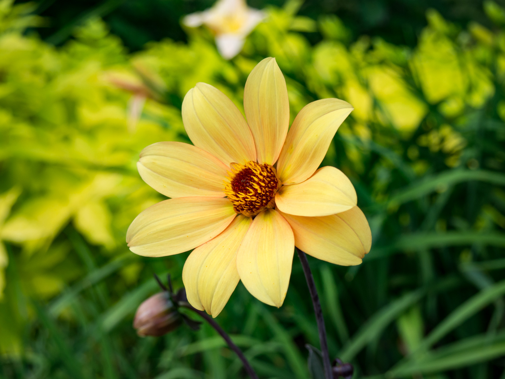 Yellow Flower in Garden