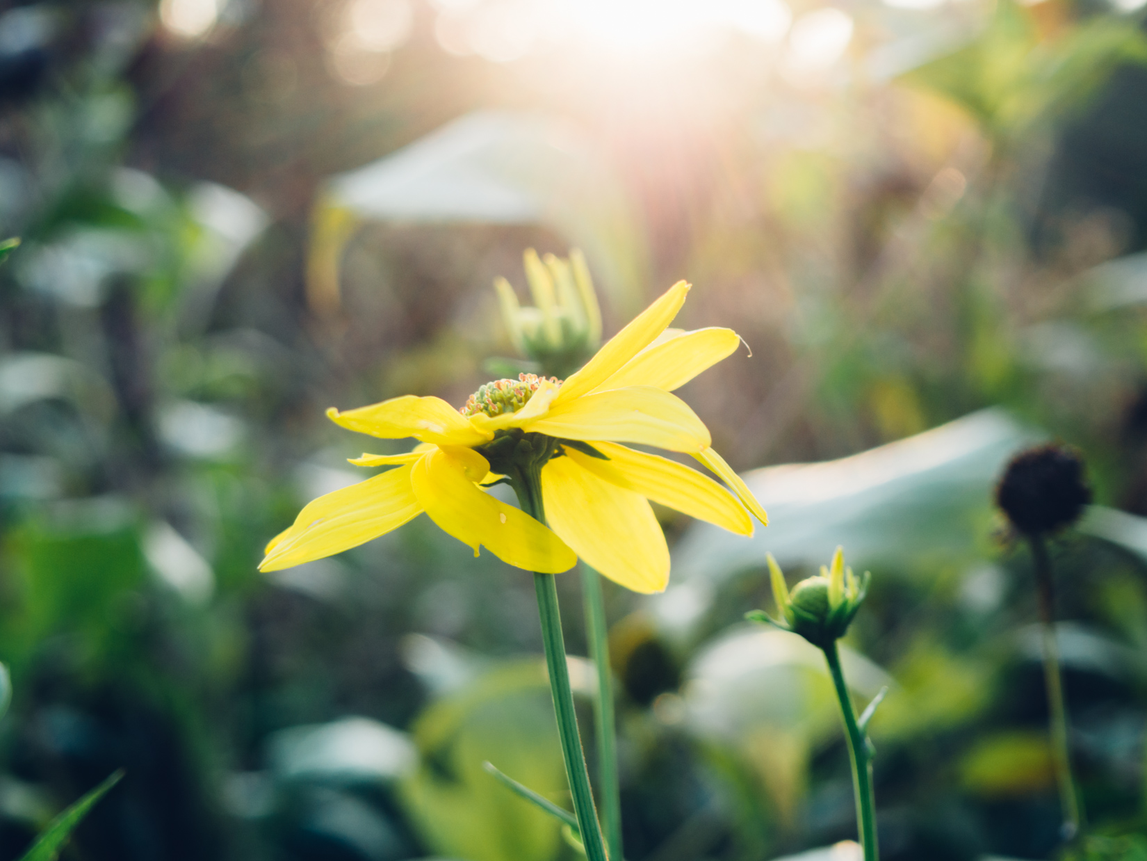 Yellow Flower and Sunlight