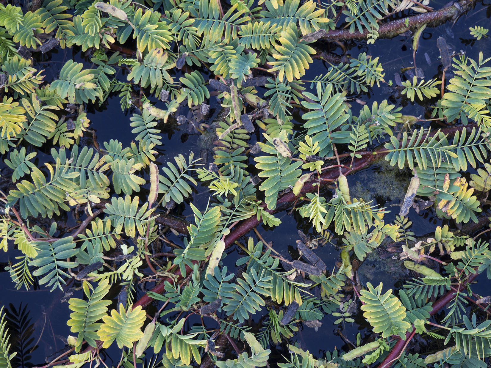 Leaves in a Pond
