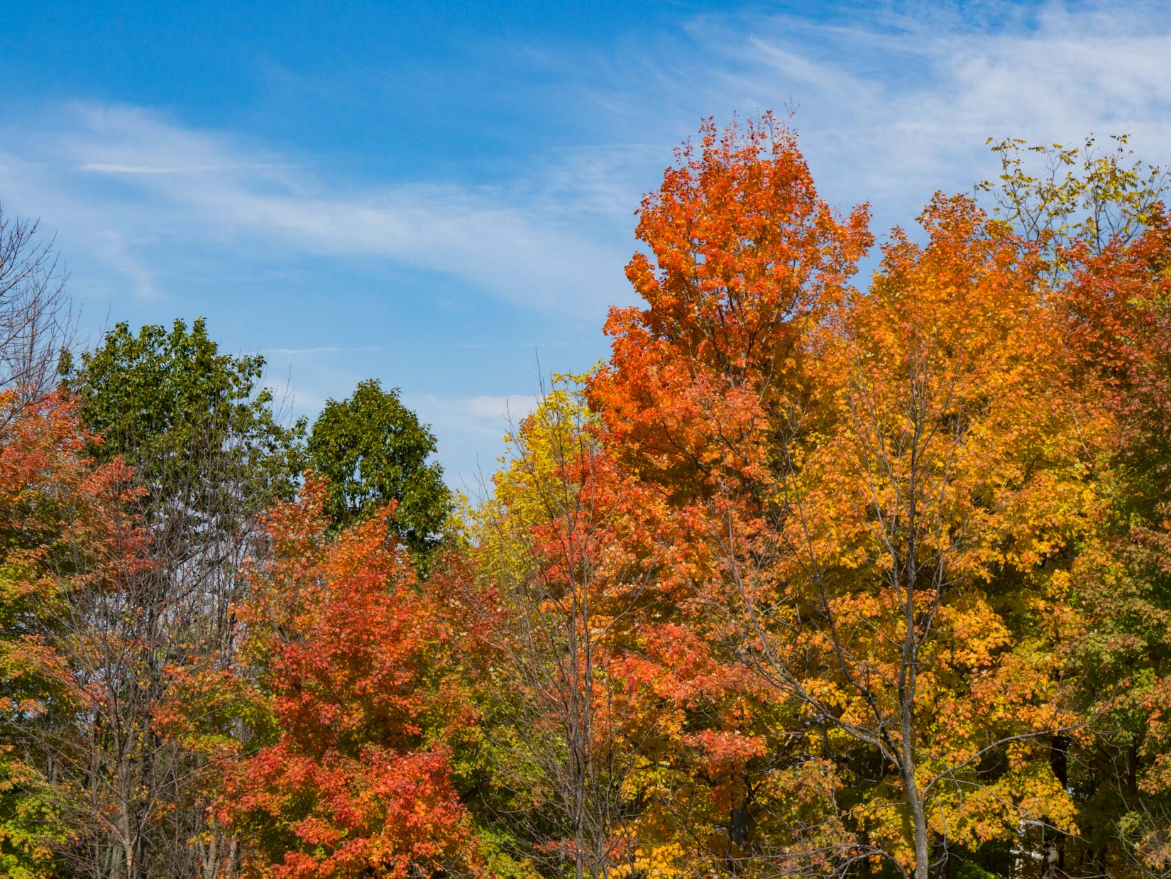 Trees With Colorful Fall Leaves