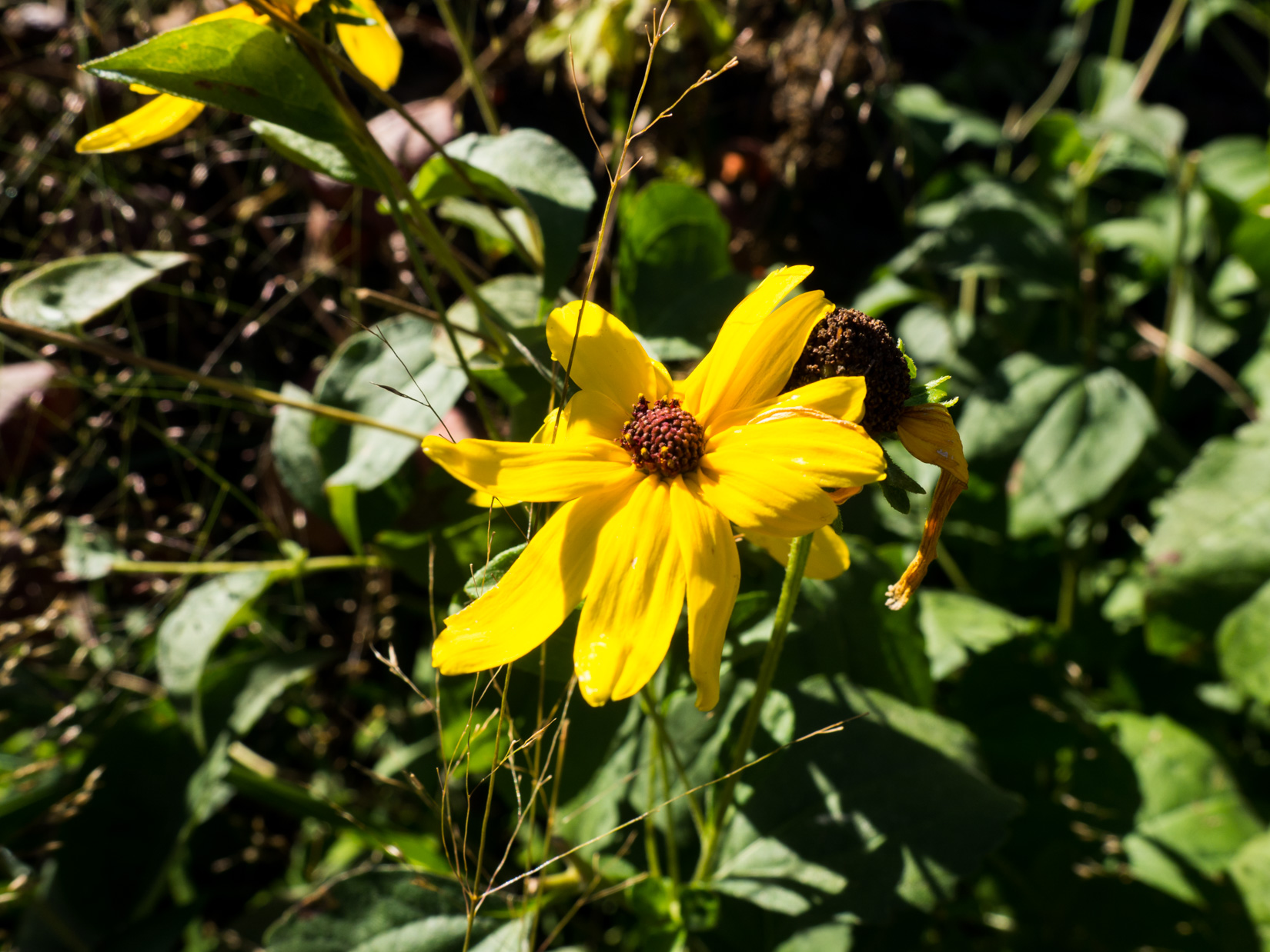 Yellow Flower in Sun and Shadows