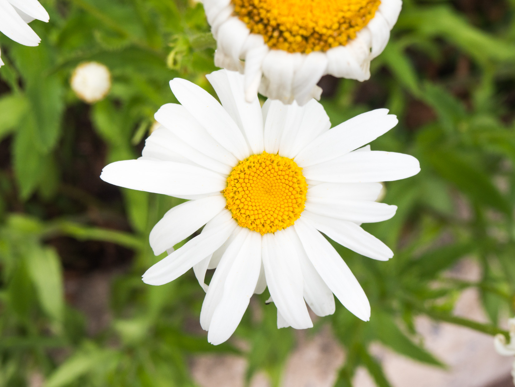 White and Yellow Flower in Garden