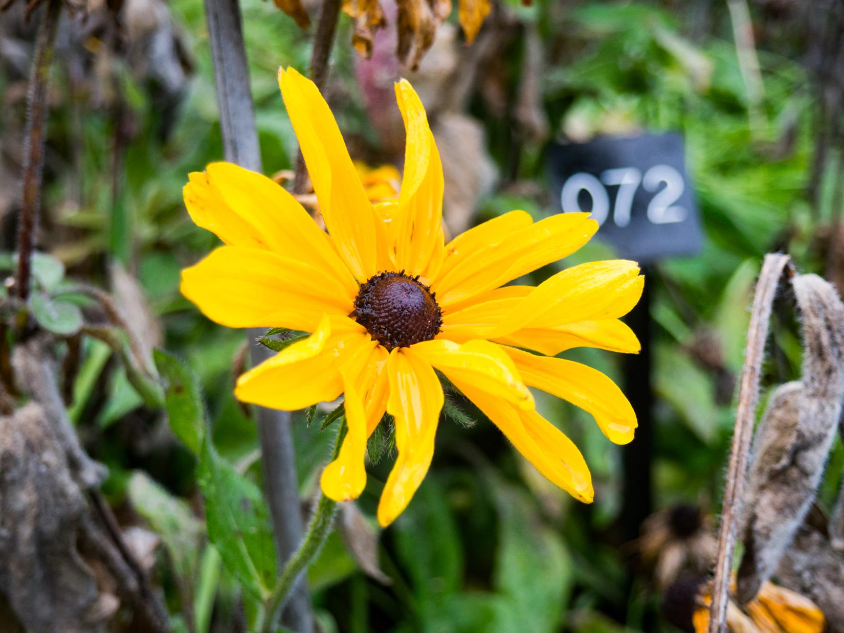 Yellow Flower in Garden
