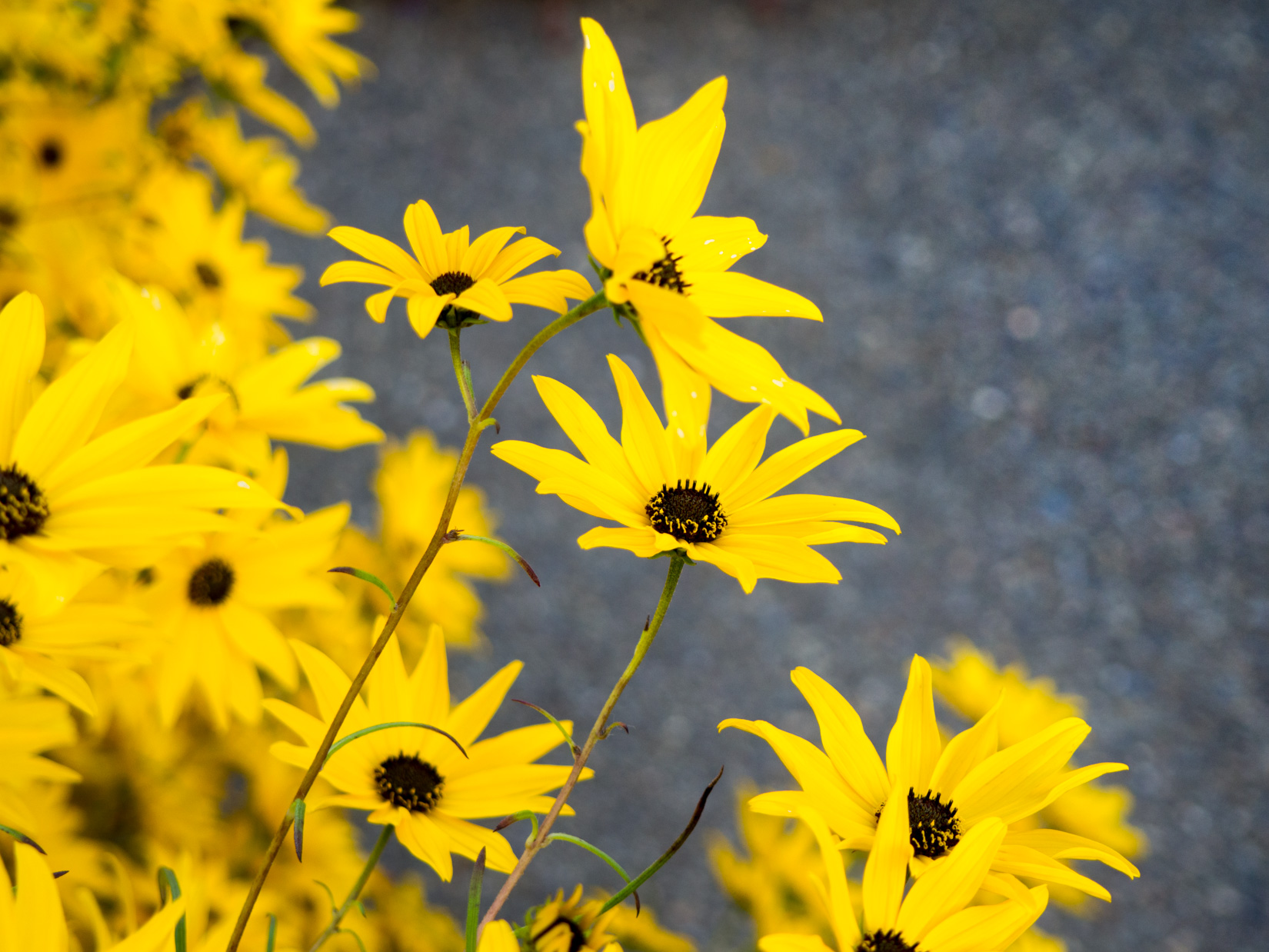 Waving yellow flowers mmt yellow flowers mightylinksfo Choice Image