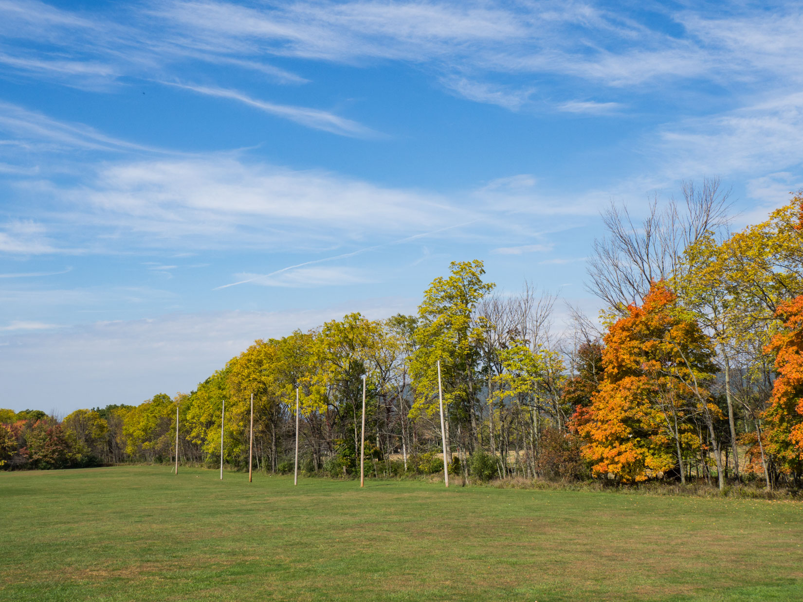 Field and Trees with Leaves Over Blue Sky