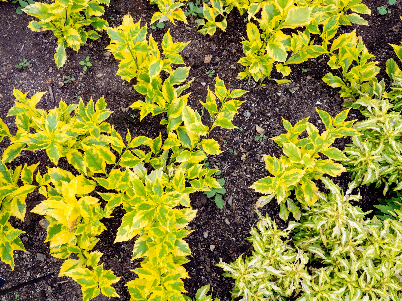 Yellow and Green Leaves on Soil