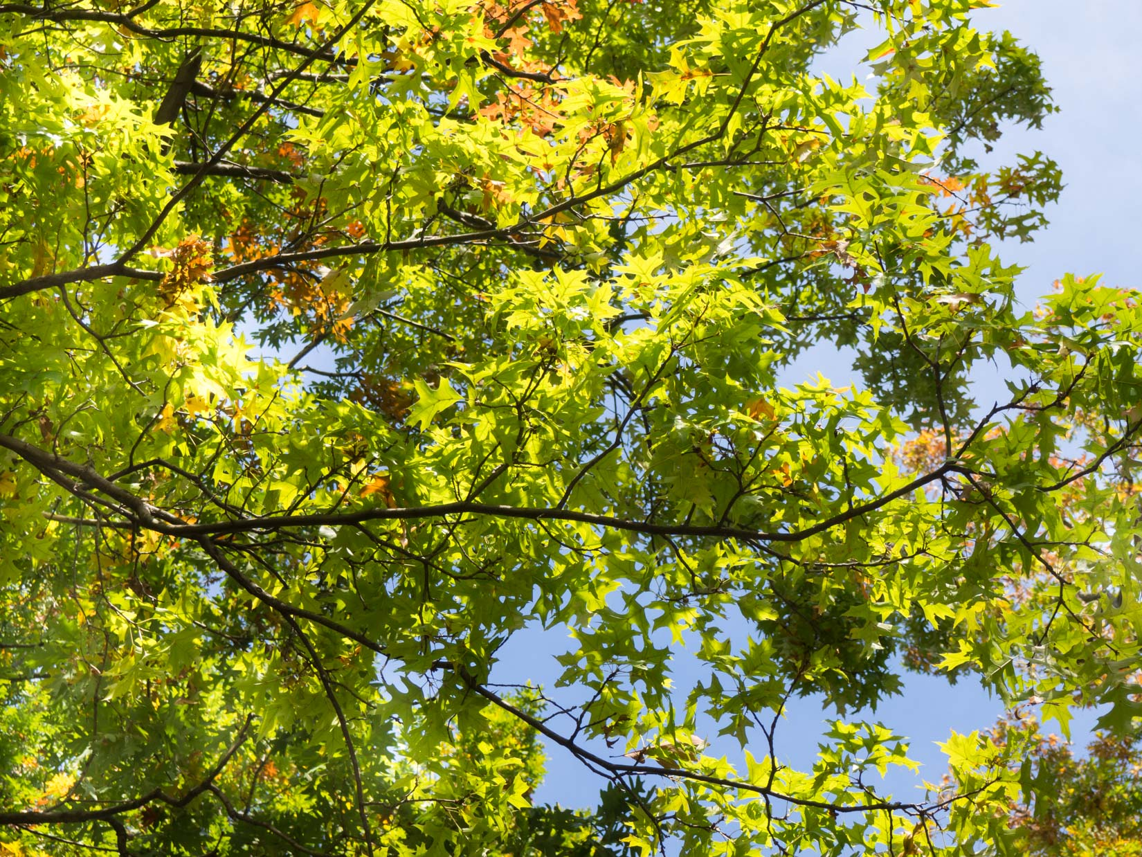Green Leaves on Tree Branches