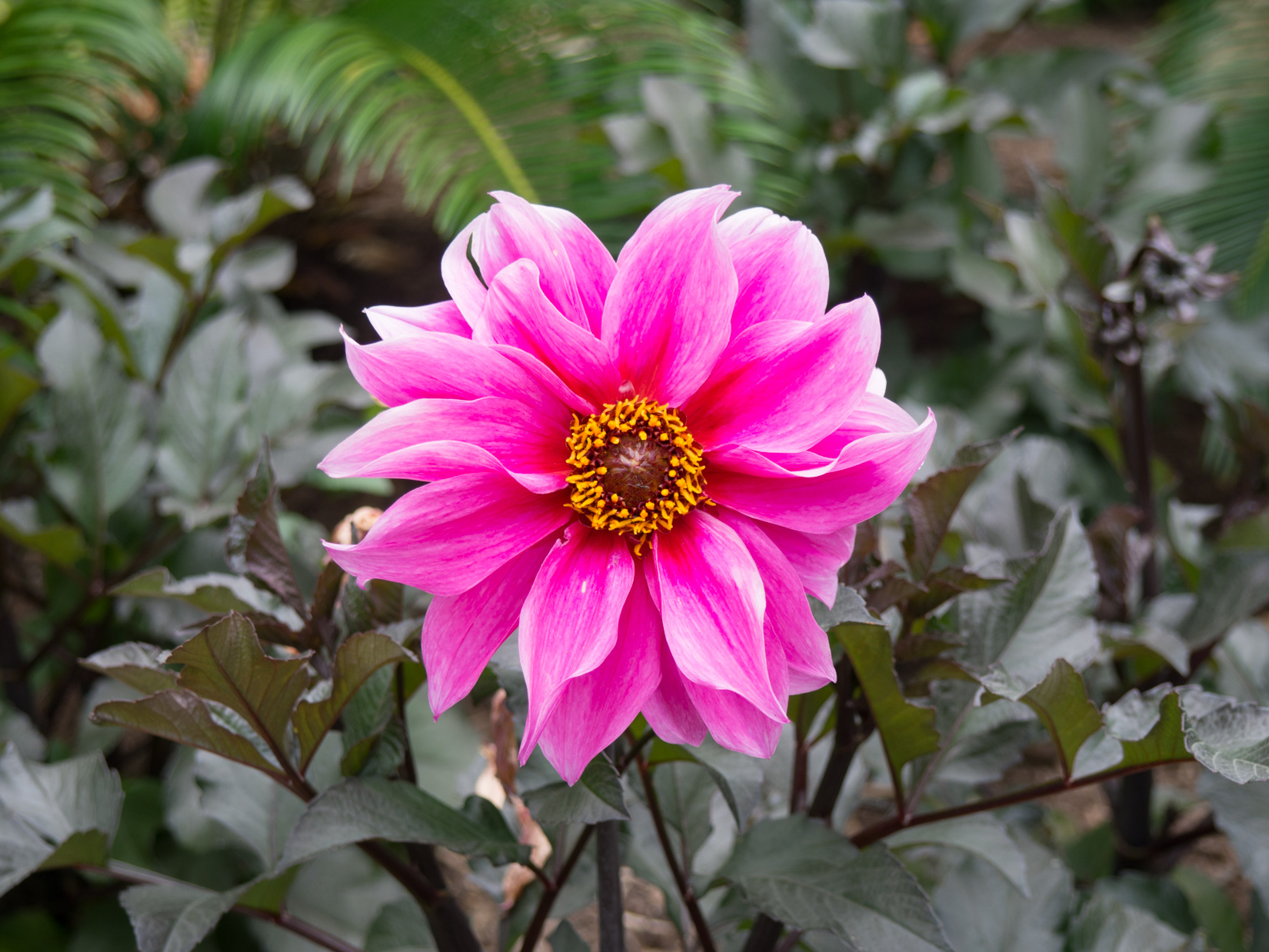 Pink And Yellow Flower Mmt