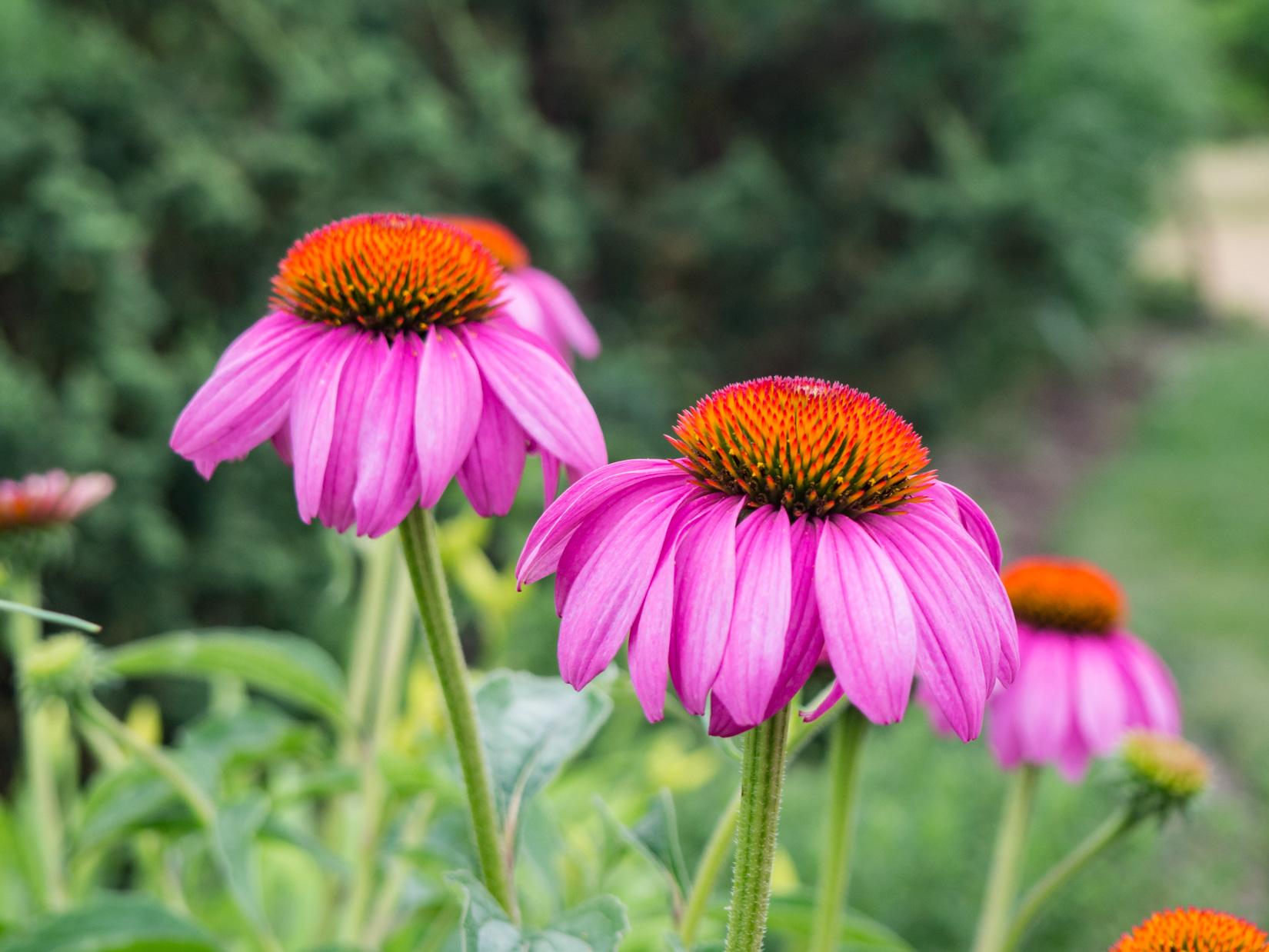 Pink and Orange Flowers