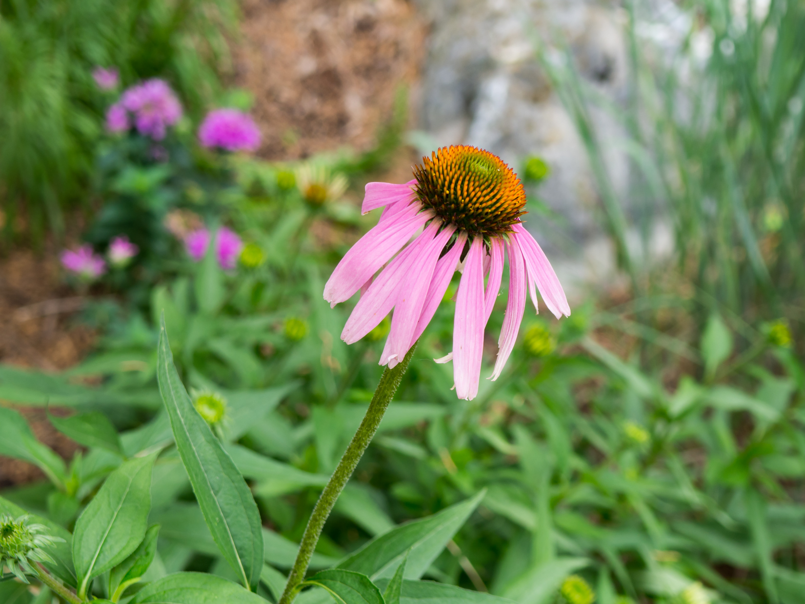 Pink and Orange Flower