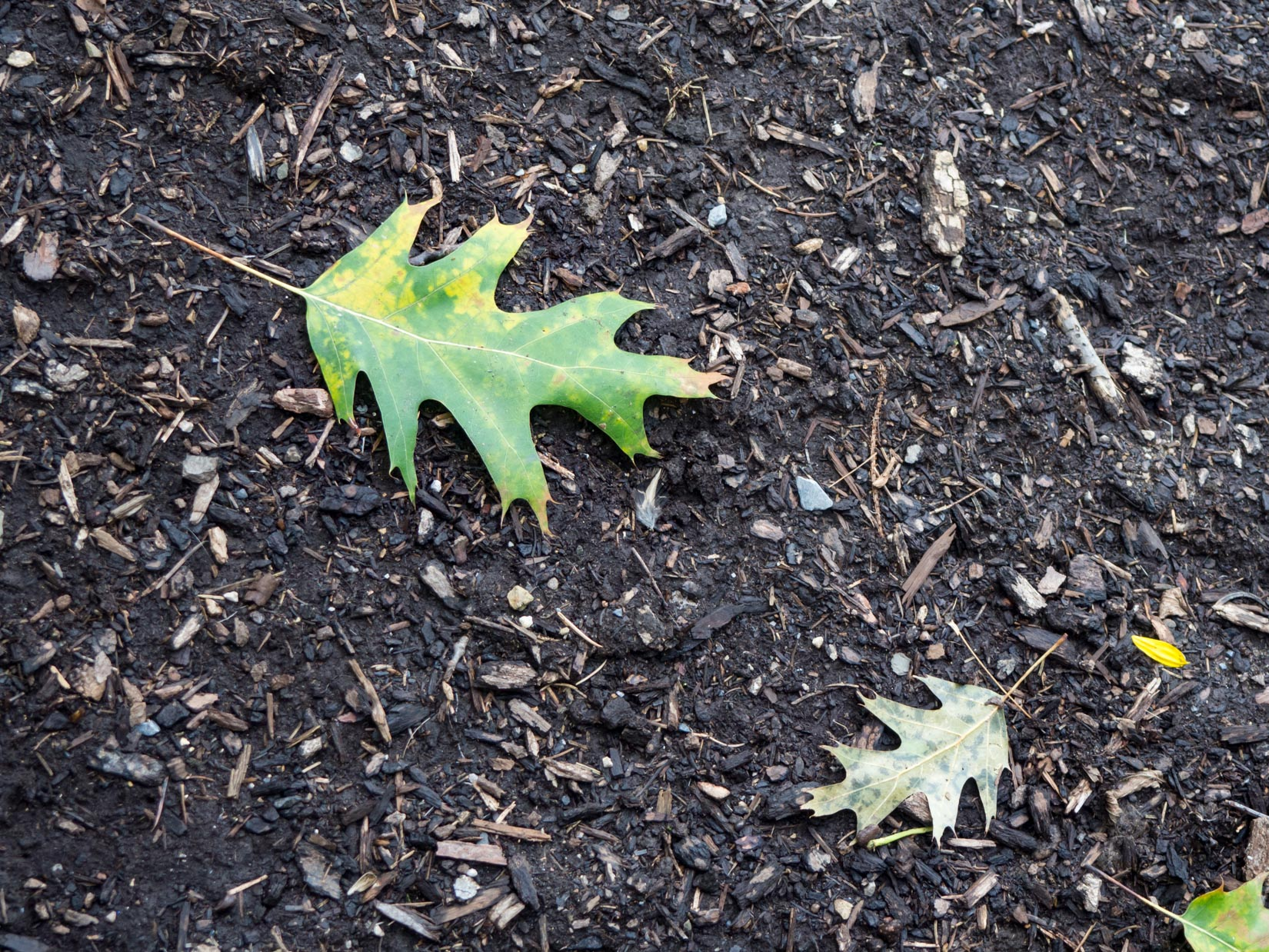 Leaves on Soil