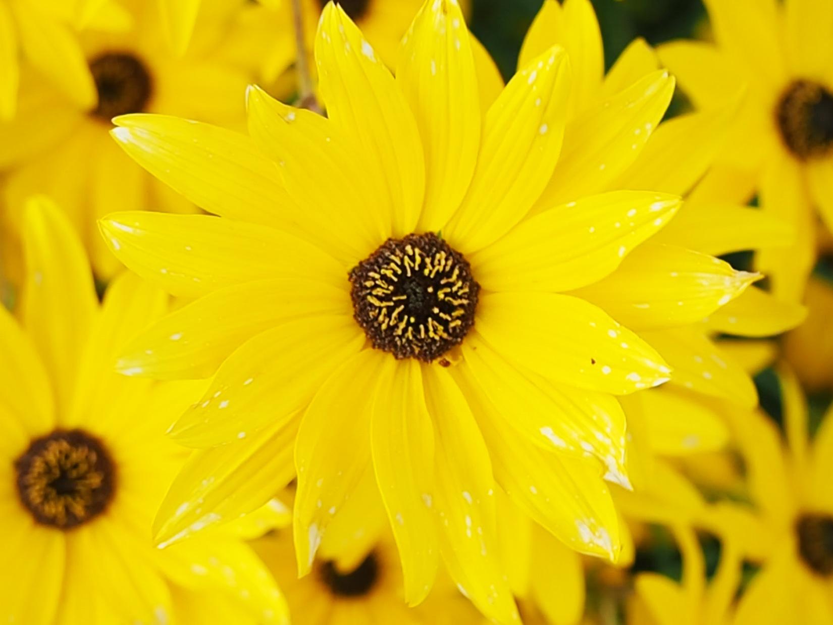 Waving Yellow Flowers
