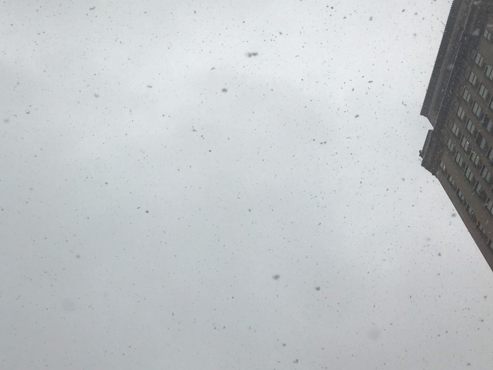 Snow Falling from the Sky