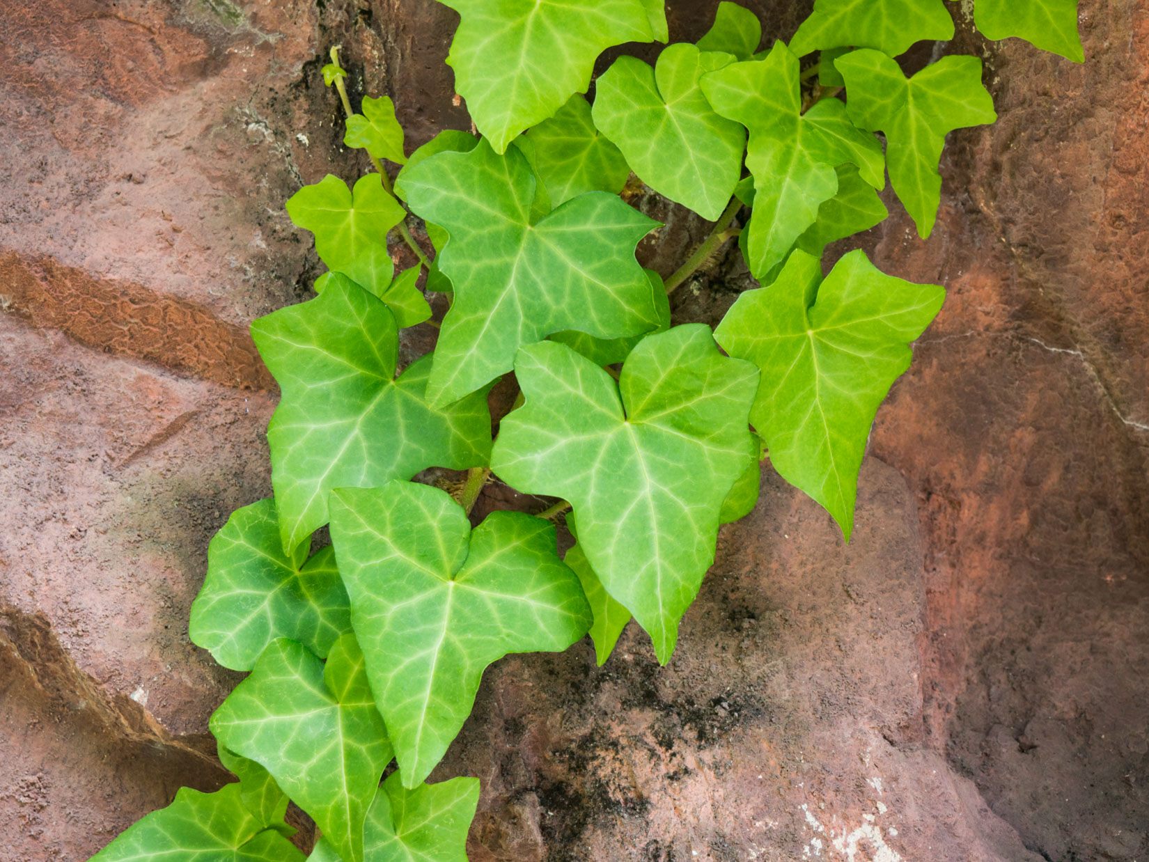 Green Leaves on Rocks