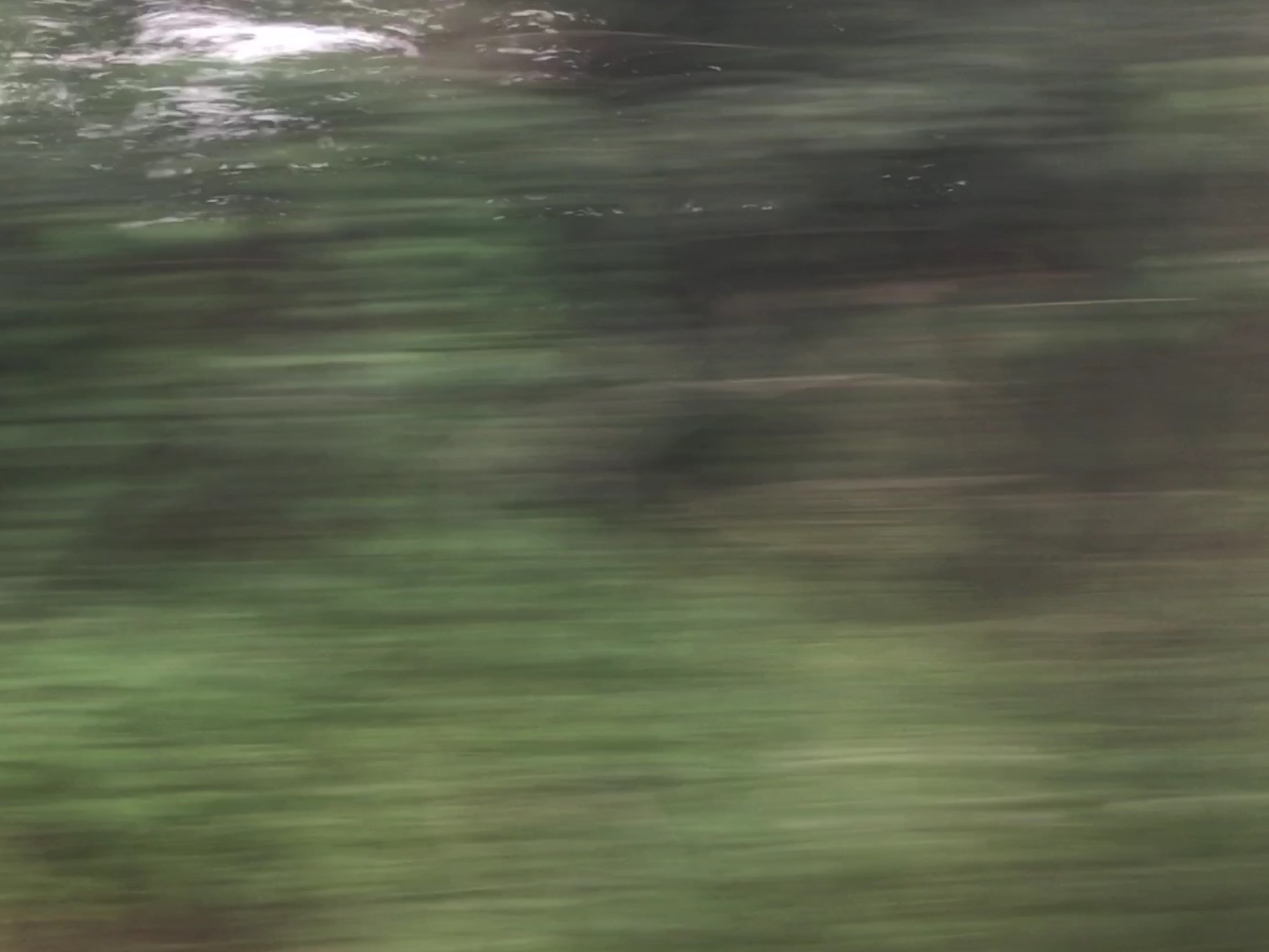Passing Trees at High Speed