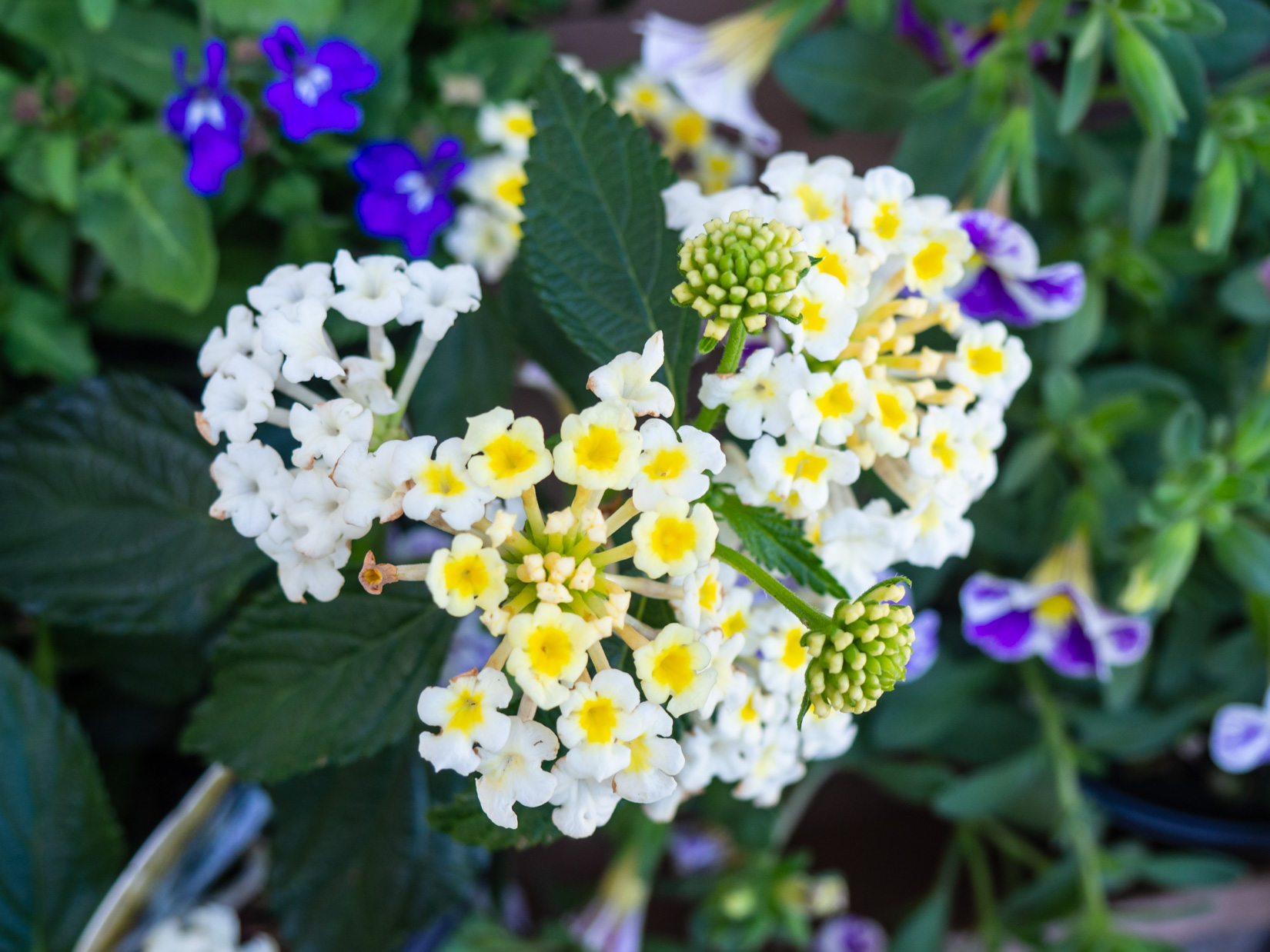 Yellow and White Flowers – MMT
