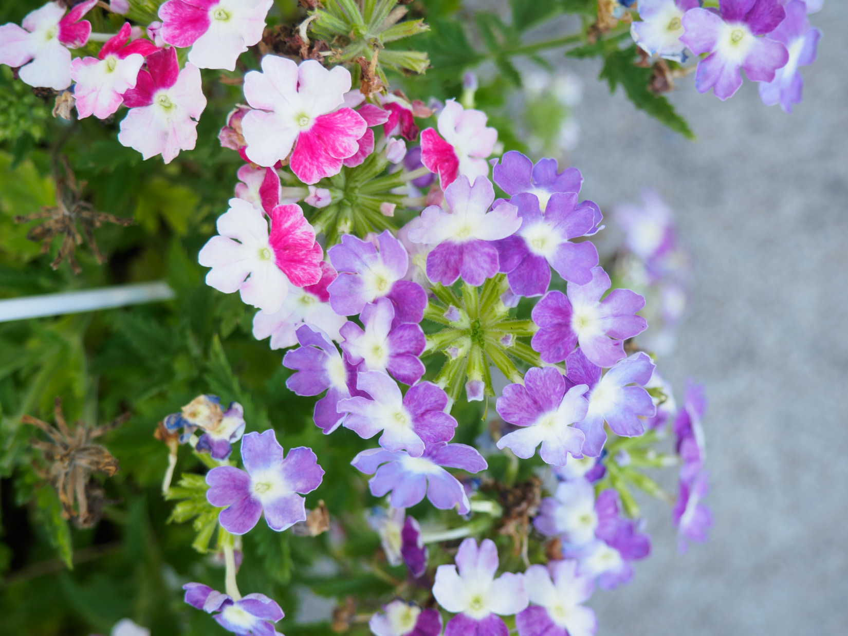 Pink and Purple Flowers – MMT