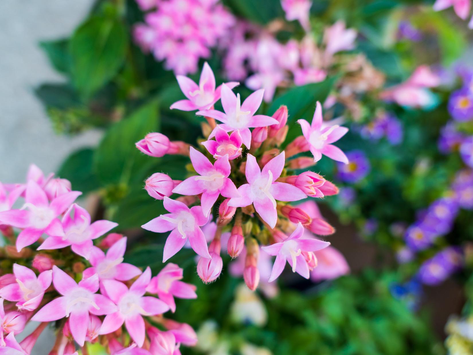 Pink Flowers – MMT