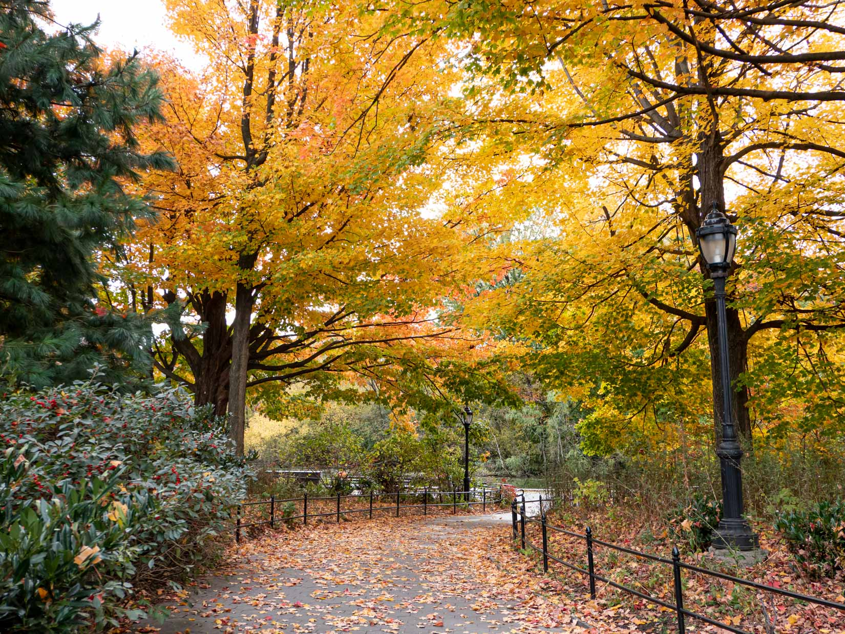 Park with Fall Trees – FOCA