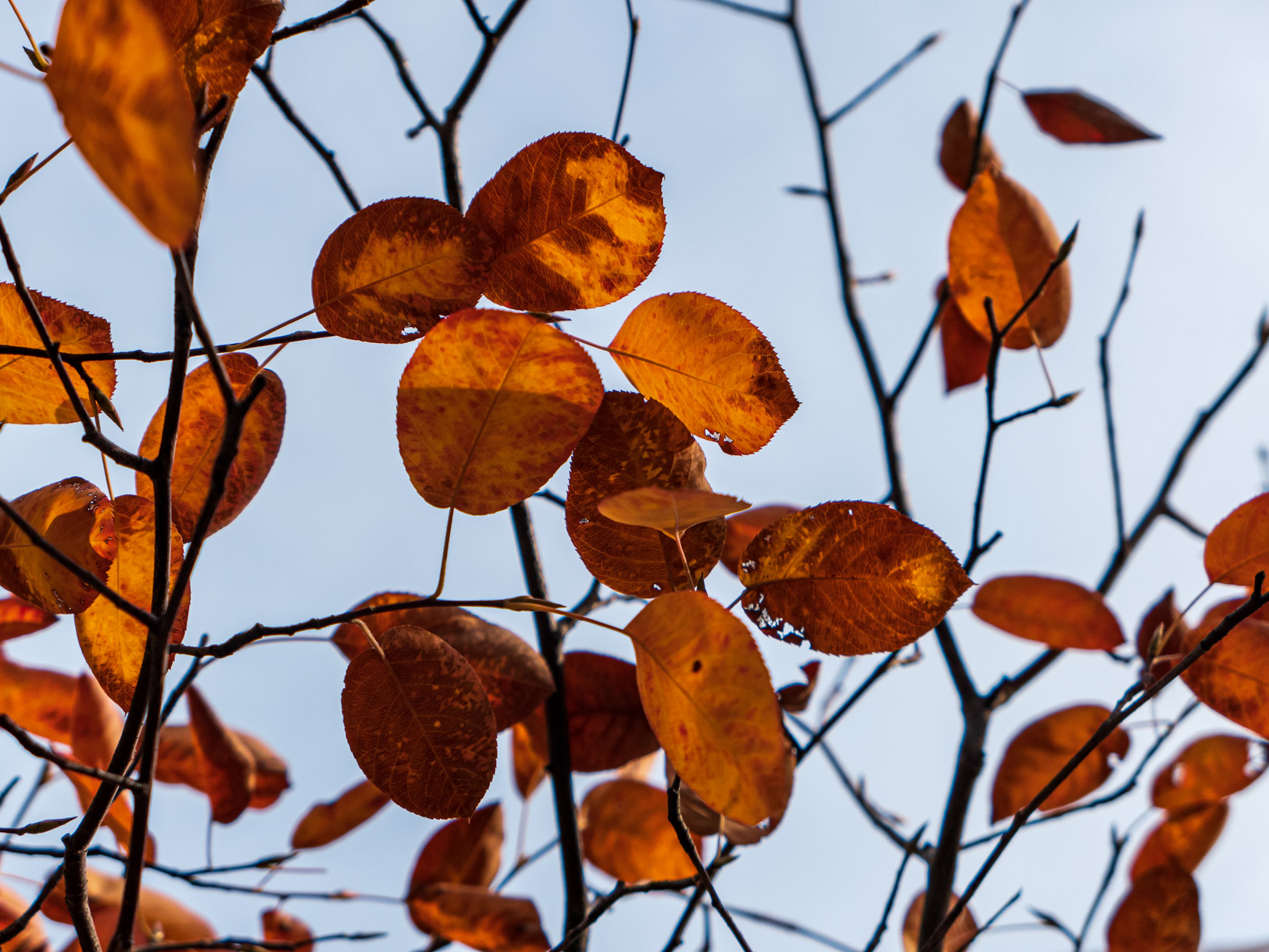 Orange and Red Leaves in Tree