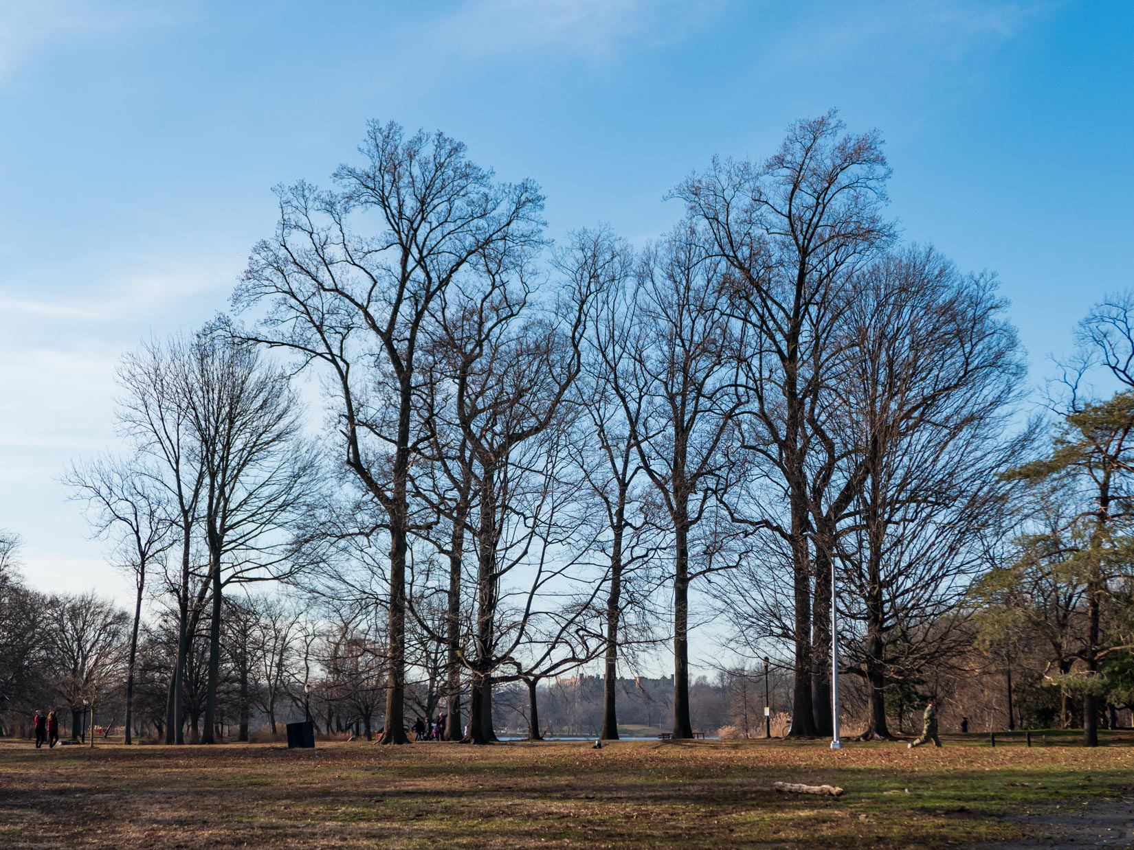 Park Trees and Landscape